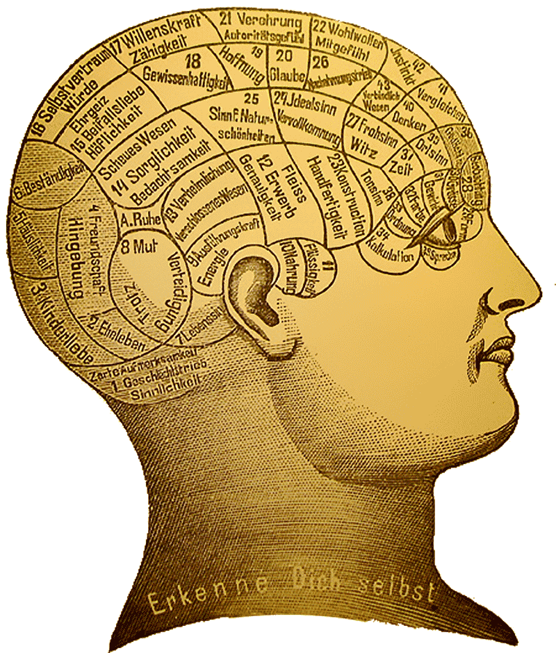 Phrenology par Davidmbusto. CC BY 3.0. Source : Wikimedia Commons