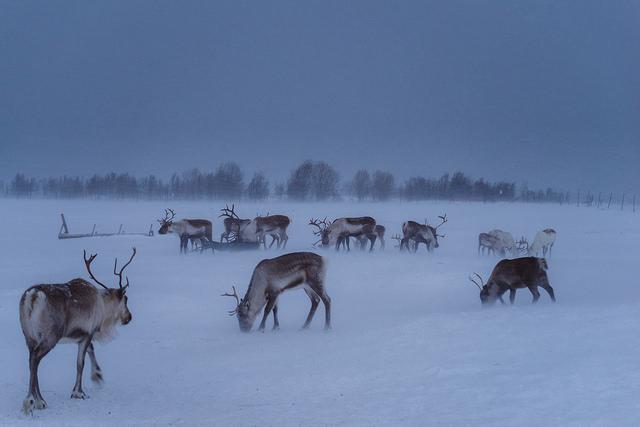 tromso par French_landscape_photographer CC-BY-NC-ND Source Flickr